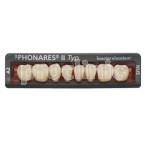 22-DIENTES PHONARES II POST INF