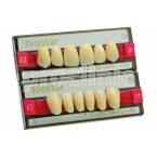 06-DIENTES IVOSTAR A-D ANT INF